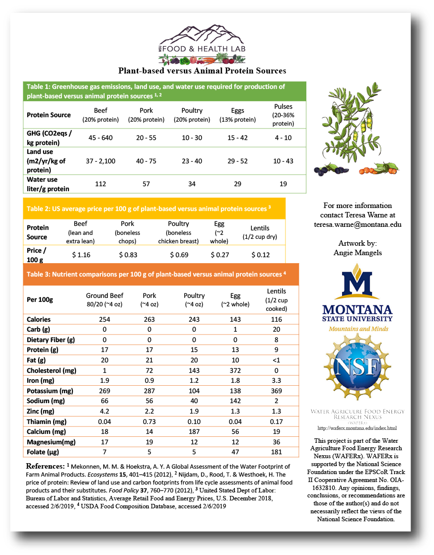 Image of Plant-based Versus Animal Protein Fact Sheet