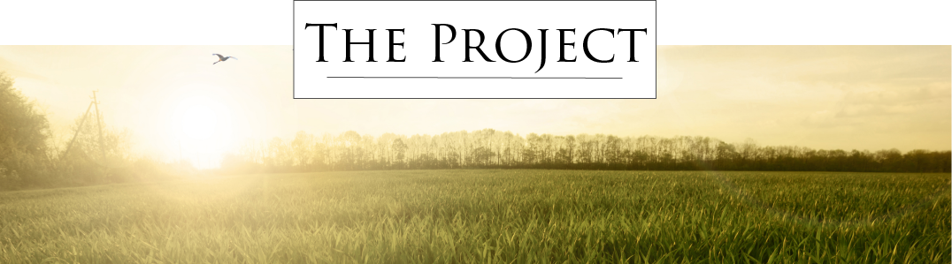 A photos o f birds flying over a green field at sunset with the words 'The Project' in a box at the top