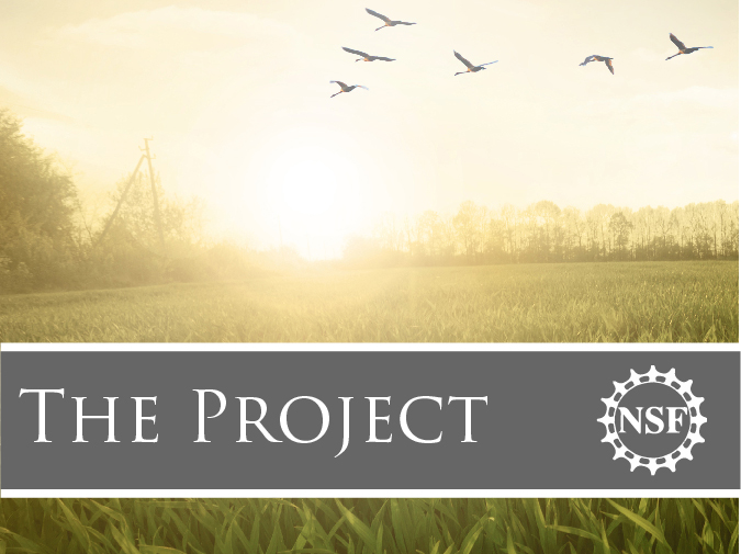 photo of birds flying over a field as the sun goes down and the words 'The Project' and the NSF logo in a grey banner